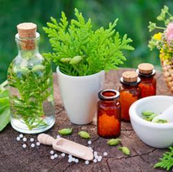 Alternativmedizin Naturheilverfahren Pflanzliche Medizin