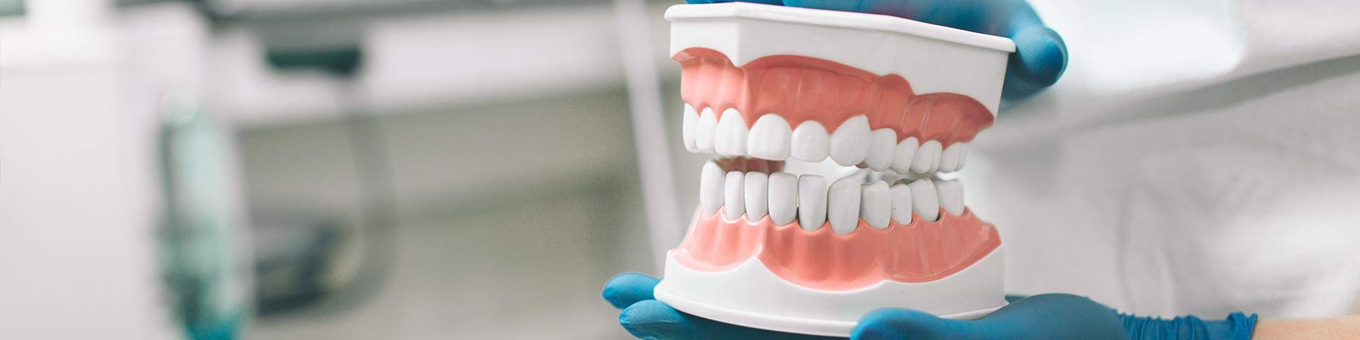 Zahnarzthelferin hält Modell von Gebiss